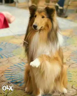 Hello I'm amit dog trainer... training at your