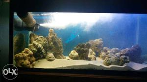 Marine Fish Tank(3ft x 1.5ft) with 75ltr Marine