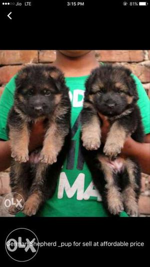 We buy all breeds dogs age not more than 50 days