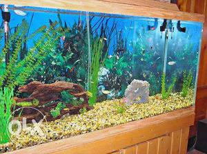 Fish tank cleaning in madurai
