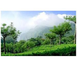 Hill Station Of Shimla Manali Honeymoon Package Online