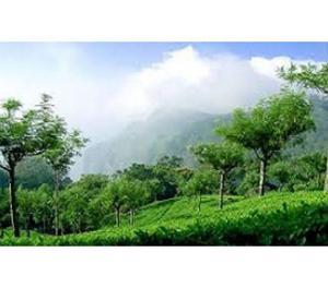 Shimla Honeymoon Holidays In Kufri & Chail Packages