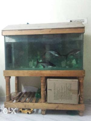 Fish tank 3 shark fish tank stand  only