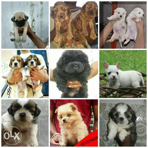 All breed puppies available here