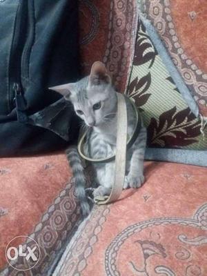 Here's a cute little kitten