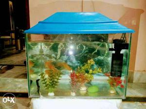 Approx 6 month old fish tank with 8 fishes,