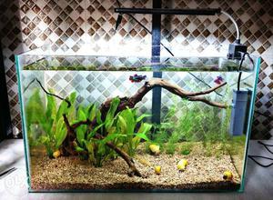 Aquarium wood and plants