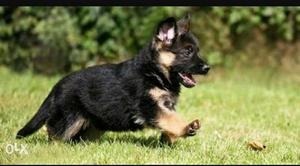 All breed available in best price and quality...