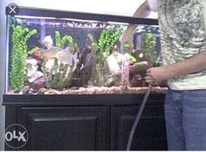 Fish tank cleaning new tank setting 2feet 500