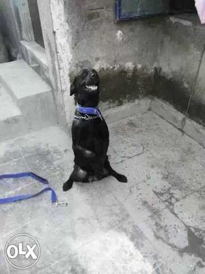 Yadav Dog Training Rajkot, All Breed Trend &