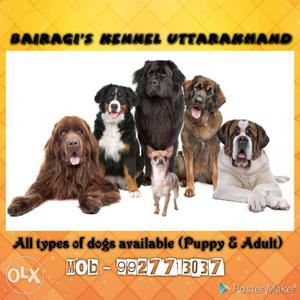 All kinds of breed available. labra pug german