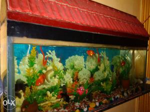 Aquarium set with stand. (8 fishes, tank,stand