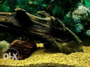 Drift wood for aquarium.Good attractive show