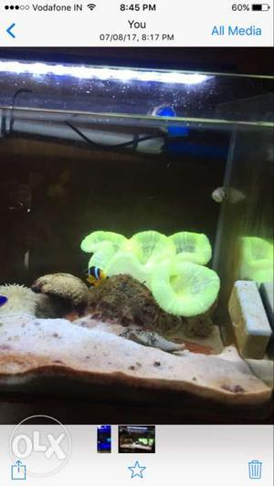 Items for sale anemone fish