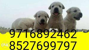 All brands and types of dogs puppies and