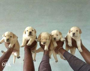 All kinds of dogs available at low price starting