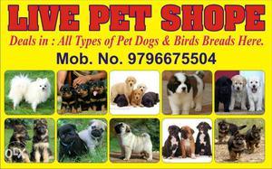 Sell Live Stock Pets Jammu Channi Rama No Advance. Check