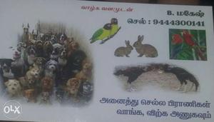 Pet Service Calling Card
