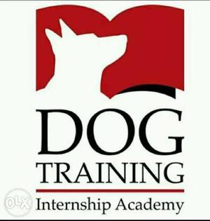 Dog Training Internship Academy