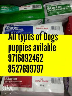 All types of Dogs and cats cages and accesories