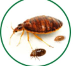 bed bugs control cochin,bed bugs services in cochin