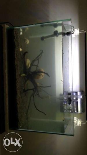 Aquarium,aquatic soil,drift wood,planted aquarium