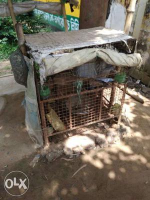 Brown Wired Chicken Coop