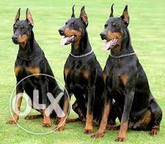 Dog trainer available for all age dogs soo call right now