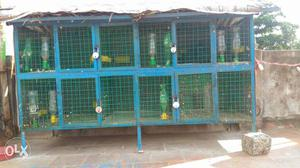 Blue And Green Chicken Coop