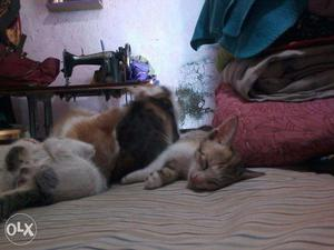 Best cats chance to get 4 small kittens cute and