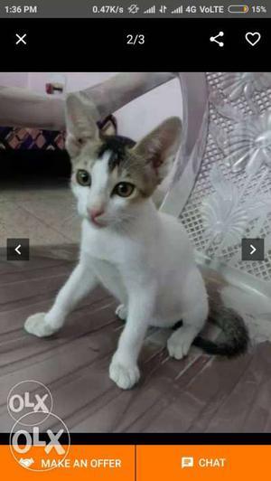 I Need a pet cat. Any breed accepted. Ready to pay