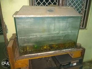 It's fish tank of big size only for 800,market