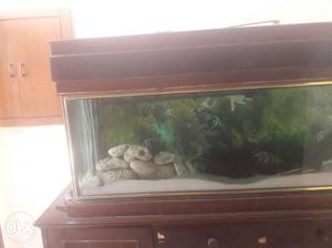 Teek wood aquarium with imported corels and