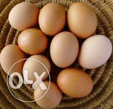 100% organic eggs from farm house poultry.13/pcs