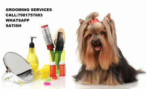 Grooming Service available