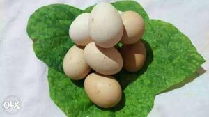 Kadaknath Hen Egg and Rs. 20/- each