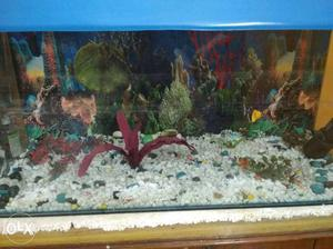 Fish aquarium with filter, fish food 3 feet