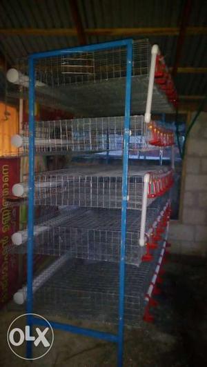 Kadakozhi rearing cage