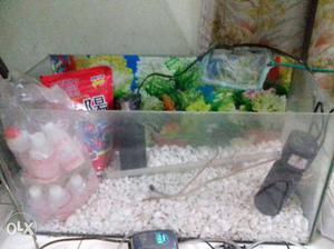 Sea shells marbles for fish tank mumbai posot class for Fish tank marbles