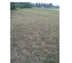 40 CENT AGRICULTURE LAND FOR SALE POIGAI AND SETHUVALAI MID