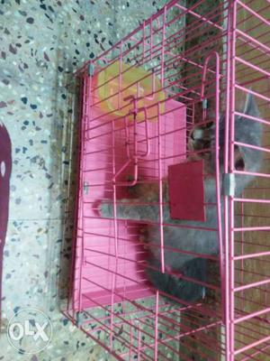 Urgent sale female cat very active and play 2