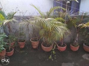 Plants for sale (300 each)