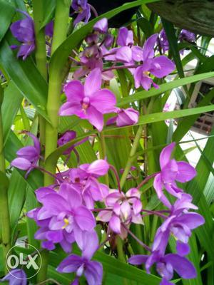 Ground orchid plant