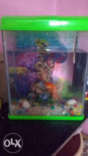 Fish aquarium pond need to sell urgent at throw