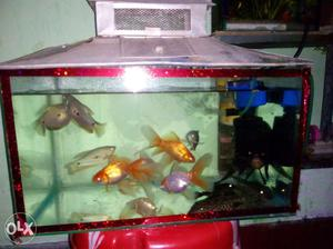 1.5 ft aquarium with steel cap. Upto 5kg stone,
