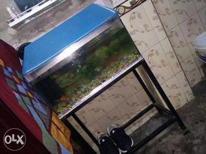A Big & Beautiful Fish Tank With Stand