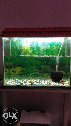 Big fish tank with all acessories at just rupees