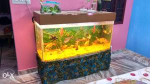 Brown Framed Fish Tank, 4 ft long