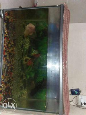 Fish tank fish flower on tank size 4 fet and