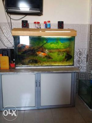 New fish tank width 3 foot, height 1.5 foot side